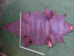 A 10 - Crocodile (3200x1000mm)
