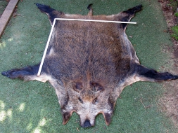 A 1-wild boar (1730x2000mm)