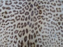 Leopard Rug CU
