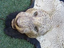 Leopard Rug HS