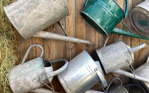 watering cans6